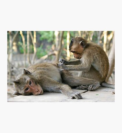 Monkey Island Pals Photographic Print