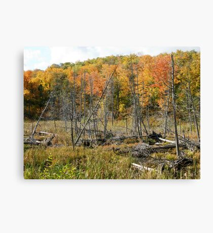 Autumn in Gatineau Park ,  No. 3 Canvas Print