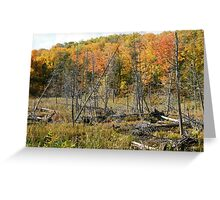 Autumn in Gatineau Park ,  No. 3 Greeting Card