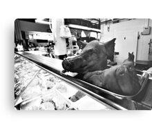 Pig's Head Metal Print