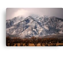 Just Above The Tree Tops Canvas Print