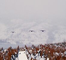 Canada Geese Amongst The Vines by Gregory Ewanowich