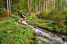 Endless stream in Valserine forest by Patrick Morand