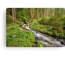 Endless stream in Valserine forest Canvas Print