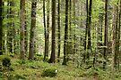 Springtime in Valserine forest by Patrick Morand