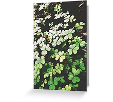 Trefoil Species Greeting Card