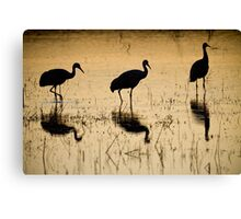 Crane Trio Canvas Print