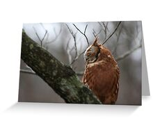 EASTERN SCREECH OWL - SIDE VIEW Greeting Card