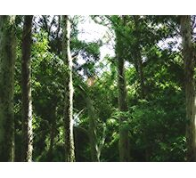 Trees at Sydney University Photographic Print