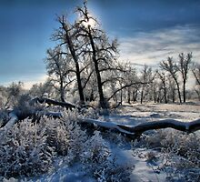 Frosty Scape by Paul  Threlkel