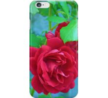 One Red Rose ........... iPhone Case/Skin