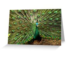 Peacock at Melbourne Zoo   Greeting Card