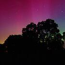 Southern Lights by Ralph  Meznar