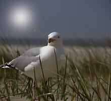 Silver Gull by AnnieSnel