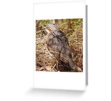 Bush Stone Curlew, Northern Territory, Australia  Greeting Card