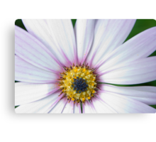 Blooming Cape. Canvas Print