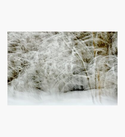 Snowstorm in Valserine forest Photographic Print