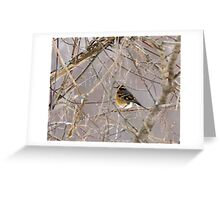 West Coast Bird visits East Coast Greeting Card