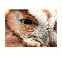 WATCHFUL EYE (Eastern Screech Owl) Art Print