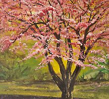 Cherry Blossom by Karen Murray