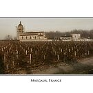 Margaux Vineyard by Sue Wickham