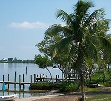 Palm at Cabbage Key by StudioN