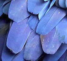 Blue Feathers by minimalistme