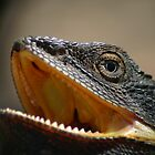 Eye of the Dragon by Erland Howden
