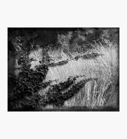 Maelencholie Photographic Print