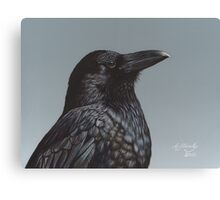 Study of a Raven Canvas Print