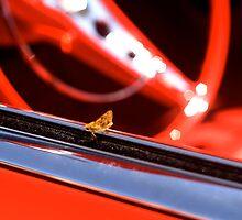 Hot moth by Trish Peach