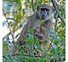 Motherly Love, Moremi Game Reserve, Botswana. Africa Photographic Print