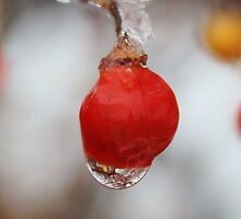 Melting Ice on a Red Berry by Gilda Axelrod