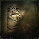 A Little Shy by AnnieSnel