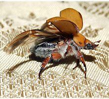 Christmas Beetle by Sandra McNabb