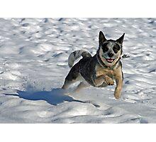 Snow Leaper Photographic Print