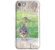 Female Mallard Duck iPhone Case/Skin