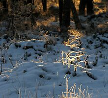 'Almost last light of the year II - Path to light' by Petri Volanen