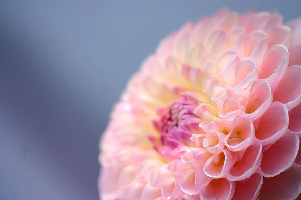Flower by Greg Roberts