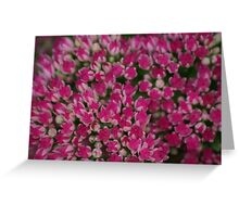 Pink Macro Flowers Greeting Card