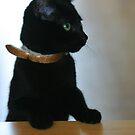 Black Kitten by Greg Roberts