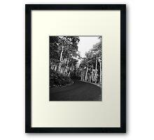 Aspen Drive Framed Print