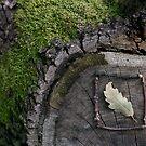 Natural Mark by pusztafia