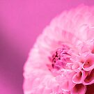Hot Pink Flower by Greg Roberts