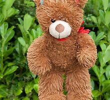 toy brown teddy bear hanging on line by morrbyte