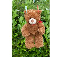 toy brown teddy bear hanging on line Photographic Print