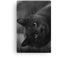 Heres look'n at you... Canvas Print