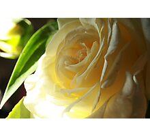 Elena rose Photographic Print