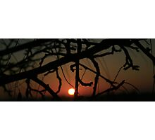 SUNDOWN  TREE Photographic Print
