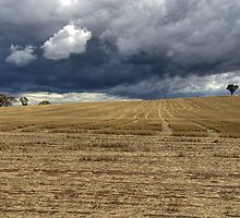 Storm Approaching by GailD
